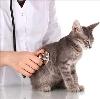 Ветеринарные клиники в Койгородке